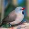 Wetlands-Bird_3