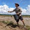 Rice sower
