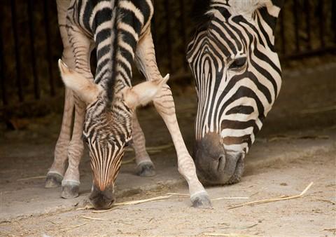 Antwerpen Zoo 2009-019