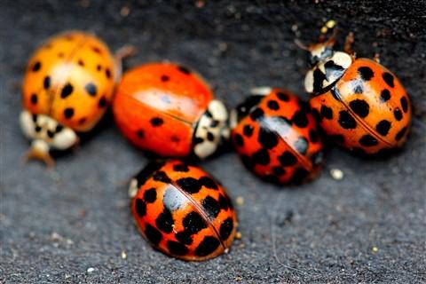 bugs lady
