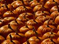 Pumpkins For Sale:  All You Can Carry For $10