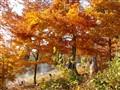 Autumn in Slovakia