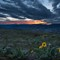 Middleton Balsamroot Sunset-1