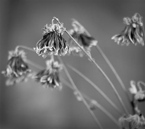 Flower shots-069