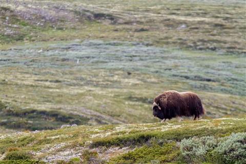 Norvegia28Jul11_0040