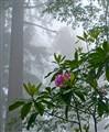 redwood np (1 of 1)
