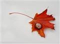 Leaf on hood