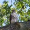 Hawk In Michigan