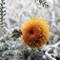 yellow flower-s