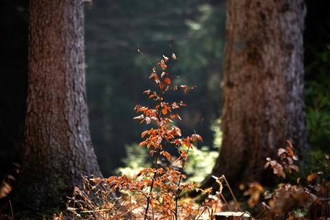 W Lesie [Kwiecień 13] 139b
