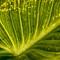 Green-Illuminated-Leaf-Web