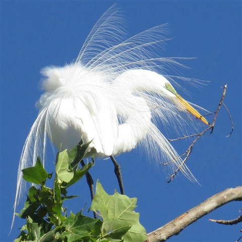 Egret-Pick Up Sticks