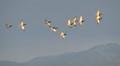 Ducks flying group