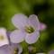 macro-flowers-150419-4