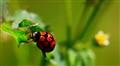 Oh My! Ladybug!!