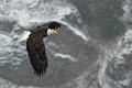 eagle in winter snow