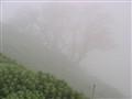Fog...........