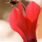 Stign Flower