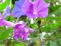 Flower 1, 25-4-2010