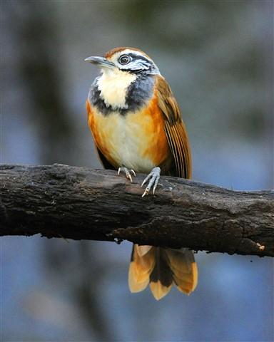 20130215-319Bird(8x10)