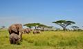 Serengeti Nation Park, Tanzania