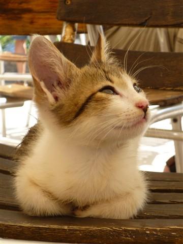 Delphi feral cat