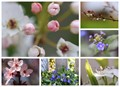 April is all about...Bloom and Bud
