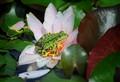 frog_wendland