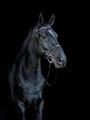 My black horse in black background