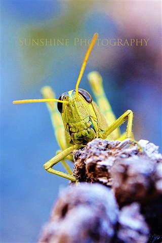 grasshopperfriend3