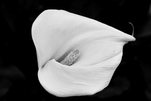 flower white3