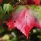 Oct 08 Pipestem H5_1273 sm