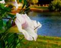 Wild Flower in The Park