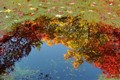 Fall color reflection on a pond