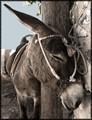 santorini #074 - 06.25.2005