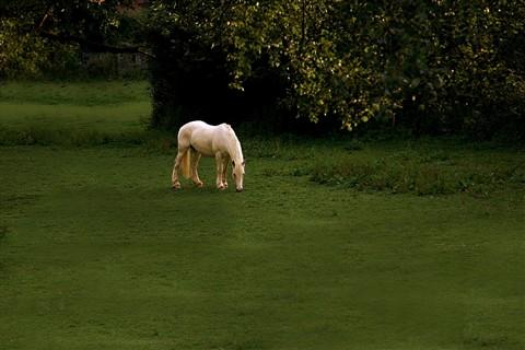 Upon a Golden Horse (98619056)
