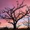 Sunnyvale_Orchard_Sunset