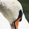 iop Swan6