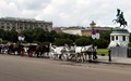 War To Carriage Horse