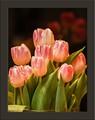 TulipsLR