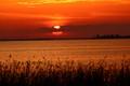 Lake Apopka sunset