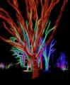 Holiday Tree Lights 0767
