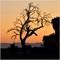 Cosumnes Sunrise Oaks 01