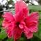 Alive-looking dead flower
