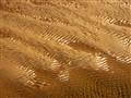Roker beach sand