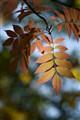 In the Autumn Sunlight