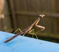 Mantis on Playground 1