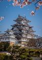 Himeji Castle Cherry Blossom Snow