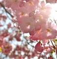 Lush Pink Sky