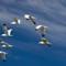 seagull: OLYMPUS DIGITAL CAMERA